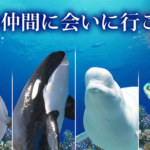 名古屋港水族館のアクセス方法や混雑状況は?営業時間や駐車場料金も!